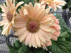 Blumenstecker Zauberhafter Schmetterling (5)